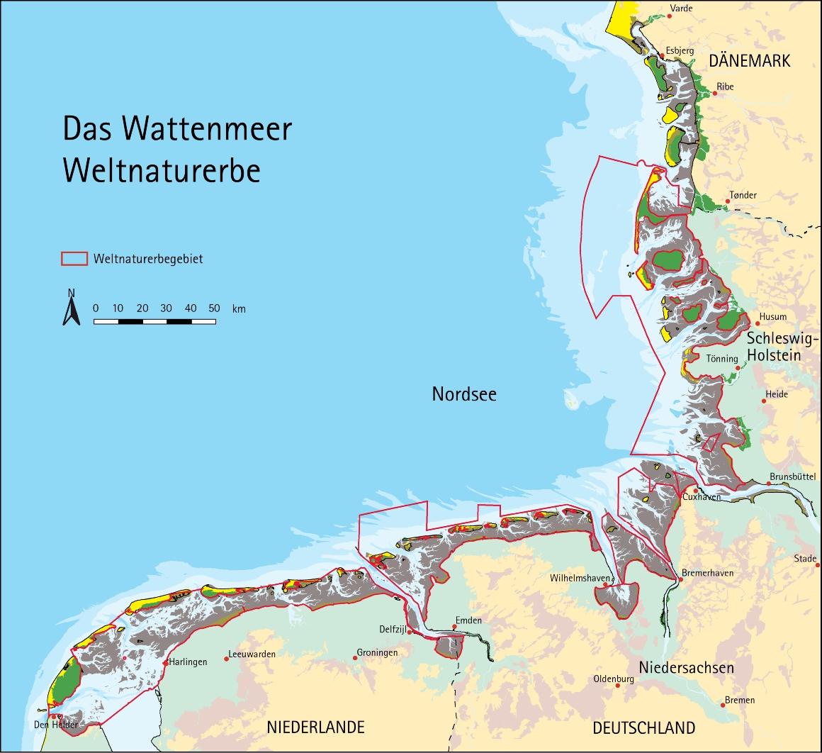 größter aal deutschlands in bremerhaven
